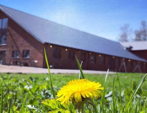 Vårmarknad på Brämhults Gård under Linnémarschen